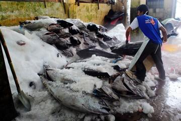 Cắt cá đông lạnh đơn giản với máy cưa xương JG210B